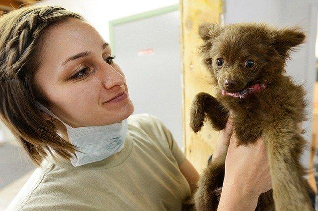 veterinářka a štěně