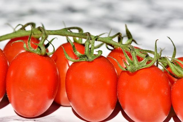trs rajčat